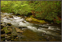 Oconaluftee River (Jerry Jaynes) Tags: park river nationalpark nc moss rocks northcarolina rhododendron bushes riverrocks greatsmokymountainsnationalpark gsmnp oconalufteeriver oconalufteevisitorcenter tripodphotography nikkor1685vr nd8xfilter
