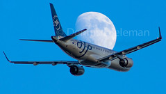 """Fly me to the moon • <a style=""""font-size:0.8em;"""" href=""""http://www.flickr.com/photos/125767964@N08/19047041908/"""" target=""""_blank"""">View on Flickr</a>"""