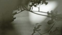 sombras 001 (Parchen) Tags: muro textura luz branco wall sombra preto cor sombras texturas parede nuances monocromtico suavidade transio parchen carlosparchen