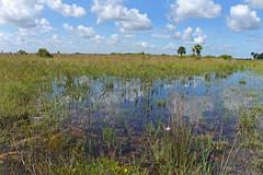kiss marsh (the feral man) Tags: nature natural florida dryprairie kissimmeeprairie staeparks kissimmeeprairiepreservestatepark