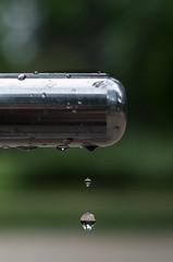 Drip (Horsch) Tags: summer takumar bokeh 55mm lensflare xe1