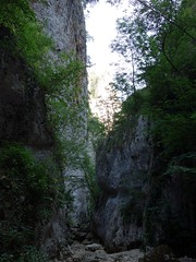 "Narrow wooded gorge • <a style=""font-size:0.8em;"" href=""http://www.flickr.com/photos/41849531@N04/19758864081/"" target=""_blank"">View on Flickr</a>"