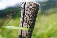 Inscription (Christian Mletzko) Tags: mountain holiday alps austria tirol österreich corn nikon bokeh d750 20mm f18 2015 tobadill at paznaun afsnikkor20mm118ged