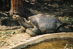 Lonesome George, Galapagos