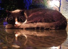 Pub Cat (Surrey, Dec 2016) (explored 14/12/16) (roger.w800) Tags: cat sleepingcat surrey