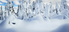 """Merry Christmas and """"Hoppy"""" New Year (dwolters2) Tags: holiday yakimacounty skiing whitepass winter snow kyrsten merry christmas happy new year rabbit white pass"""