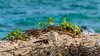 Beach Blur (Laith Stevens Photography) Tags: beach blurred green weeds leaves plant sand sea ocean twiggs shells olympus omd em1 50200mmf28swd olympusinspired tropical pacific islands nauru