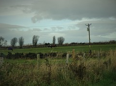 247. Scotland 2016 (@bodil) Tags: scotland ecosse chevaux horse
