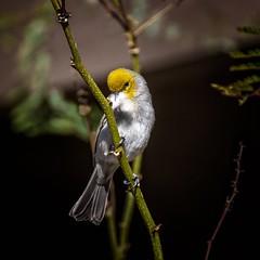 Bed Time (Portraying Life, LLC) Tags: unitedstates arizona pima handheld nativelighting nesting ventanacanyonwash