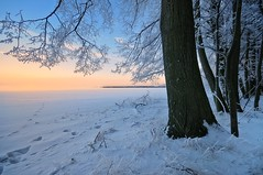 """snowy morning"" (Karel Hrouzek P H O T O) Tags: tree woods landscape landschaft snow today field frost czech svitavy winter nikon sigma exposure pov sky sun sunrise dawn freezing water forest nature wild"