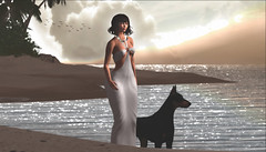 Will you walk with me in silence? (Alexa M.) Tags: wasabipills ultra lucboutique unitedcolors treschic theskinnery fashiowl secondlife beach animals pets doberman water outside sunset