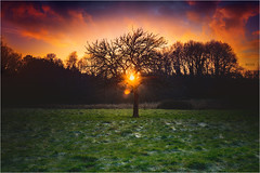 The winter light is there (PascaLucasJy) Tags: hiver winter champ lumière light ciel clouds nuages couleurs colors arbres végétal gel soleil sun soir bretagne breizhscape