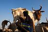 Abyei: Communities in Limbo (Albert Gonzalez Farran) Tags: abyei dinka misseryia southsudan sudan animals arabs cattle child children cow farmer farmings milk tribalconflict tribes agok southsudansudan