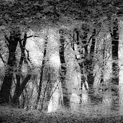 Trees In Water 099 (noahbw) Tags: captaindanielwrightwoods d5000 nikon abstract blackwhite blackandwhite branches bw forest landscape leaves monochrome natural noahbw reflection spring square trees water woods treesinwater