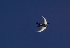Flyby (Rock-paper-scissors) Tags: norwegian plane airline moon flyby night jet passengerjet