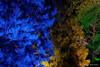 Bunt Bunt Bunt sind unsere Wälder (Sockenhummel) Tags: botanischergarten botanischergartenberlin christmasgarden christmasgardenberlin park christmas weihnachen zauberwald magicforest bäume trees bunt beleuchtung forest wald nadelbäume botanicalgarden berlin