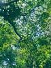 #tree #nature #natural #natureza (marialuizajunger) Tags: natureza natural nature tree