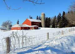 Red Barn in Winter - IN EXPLORE (Lois McNaught) Tags: redbarn winter happyfencefriday snow farm rural outdoor flamborough hamilton ontario canada rustic oldbuilding