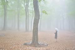 energy flow (shoshibata) Tags: morning people mist tree nature japan landscape spring aomori