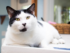 Wrangler (trinketbaby) Tags: california friends rescue pet cats pets cute beach dogs animal animals fun for bay la los furry long day angeles south adorable southern event booths shelter non profit spca society prevention adoption cruelty nonprofit spcala