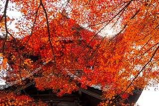 紅葉 - 南禅寺三門 / Nanzen-ji Temple