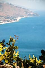 © Sicilia (Cesare Andreano) Tags: sea summer italy ficodindia italia mare estate july sicily pricklypear sicilia seaview luglio 2015 caposantalessio vistasulmare nikond3000 ingirol cesareandreano