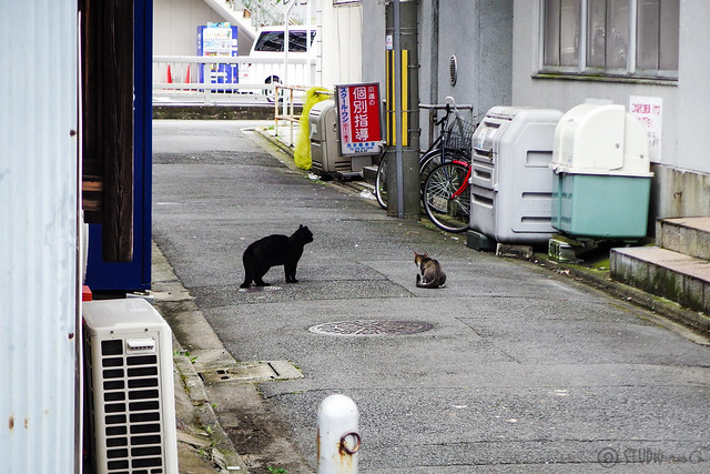 Today's Cat@2015-07-27