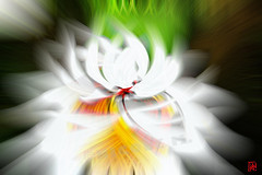 Une nouvelle espce de marguerite...... (mamnic47 - Over 6 millions views.Thks!) Tags: photoshop abstraction dlires effetphotoshop effetsdelumires img6211photoshop