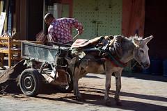 Donkey Work / Marrakech (Images George Rex) Tags: marrakech marrakechsafi morocco donkey cart medina photobygeorgerex imagesgeorgerex maroc marrakesh ma ⵜⴰⴳⵍⴷⵉⵜⵏⵍⵎⴰⵖⵔⵉⴱ المملكةالمغربية donkeyandcart workinganimal