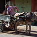 Donkey Work / Marrakech
