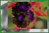 Solitaria (seguicollar) Tags: flower flor imagencreativa photomanipulación plantas virginiaseguí vegetal morada purple artedigital arte art artecreativo