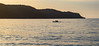 Seascape Sunrise (Merrillie) Tags: uminabeach sunrise nature dawn mountains silhouettes australia nswcentralcoast kayakers newsouthwales clouds rowers nsw people beach silhouette centralcoastnsw umina outdoors photography seascape oceanbeach waterscape landscape sky water sea