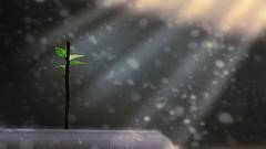(oliurrahmanpritom) Tags: lens lights lightroom light landscape newlife explore exploring excellent commons xplorstarts collection click creative camera colorful colors collective bangladesh best beautiful backlight rays bokeh fotografie flicker flickriver foto fotographe fine grain golden greatphotographers green
