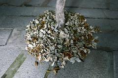 dropped (troutfactory) Tags: leaves installation sculpture art artwork artfestival 篠山市 sasayama 関西 kansai 日本 japan ricohgrd2 digital