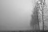 angoli d'autunno (mat56.) Tags: paesaggi paesaggio landscape landscapes padana pianura sancolombanoallambro milano lombardia alberi trees nebbia fog misty autunno autumn bianco black nero white antonio romei mat56 atmosfera atmosphere
