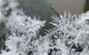 ❄❄❄ (CU TEO MD) Tags: maryland macro105mm macro macrodreams macrophotography snow snowflake naturebynikon nature ngc twop soe artofimages simplysuperb yourbestoftoday