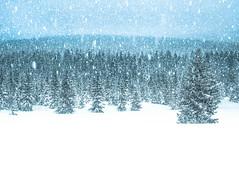 Winter Fairy Tale... (amanecer334) Tags: winter zima invierno nature naturaleza natura góry izezry sudety śnieg biało krajobraz polska polish mountains montanas snow adventure travel trees las forest bosque amazing wonderful beautiful world europe delicate peaceful peace calm color white snowfall nieve polonia poland wood landscape paisaje magic