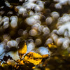 Leaves over the Sea of Love (*Capture the Moment*) Tags: 2016 backlight backlit blätter bokeh bubblebokeh bubbles forest gegenlicht leaves natur nature pflanzen seifenblasenbokeh sonya7mii sonyilce7m2 trioplan28100neo wald bokehlicious