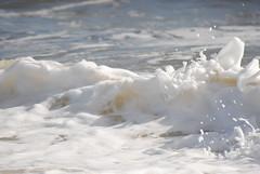 DSC_0140 (sarahk5446) Tags: gulfofmexico gulfcoast water waves wildlife gulfshores ocean orangebeach outside nautical nikon natural nature sand summer spring sea sky swim surf sun seashore alabama adventure america floridastateparks florida