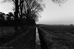 In medio virtus (Wils,Rogier) Tags: in medio virtus grens nederland belgie rogier wils monochrome zwartwit zwat wit velden