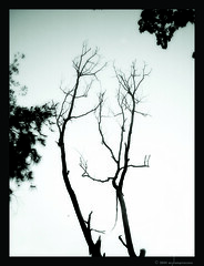 Breathe Out The Sky (asylum_princess) Tags: sky white black tree nature earth surreal breathe karishma asylumprincess