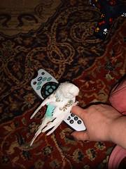 Sylvester (roobarbs) Tags: bird sylvester budgie
