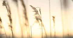 sunset at broadkill (salnunzio) Tags: sunset sky marsh ilikegrass salnunzio