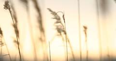 sunset at broadkill (salnunzio) Tags: sunset sky marsh ilikegrass salnunzio