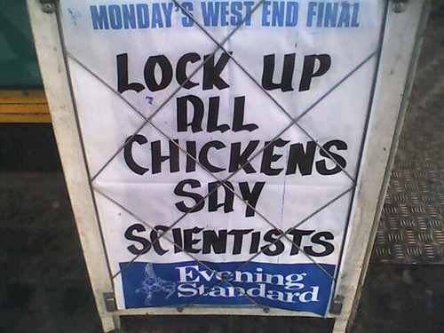 Lock Up All Chickens Say Scientists di LinkMachineGo
