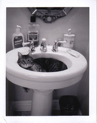 Excuse our mess. (brettbigb) Tags: morning cute home wet water cat polaroid bathroom mirror town washington cozy kitten sink sleep hometown kitty 2006 calm upstairs sleepy cuddly messy polaroids trashcan february peggy 667 smalltown goodtimes listerine landcamera threelegged polaroidlandcamera pegleg ilivehere woolley sedrowoolley sedro threeleggedcat polaroid667 thehoneymooncottage automatic230 peggyleggs cetophil itmustbelove handicat welivehere gatewaytothenorthcascades loggingtown thisiswherewelive gggsink thiswasaloggingtown thetownthatloggingbuilt savepolaroid savepolaroids sedrowoolleyisatimemachine