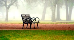 still waiting (slight clutter) Tags: park morning trees mist fog bench bravo solitude texas interestingness1 houston iloveflickr hermannpark slightclutter topf350 before8am katyahorner slightclutterphotography