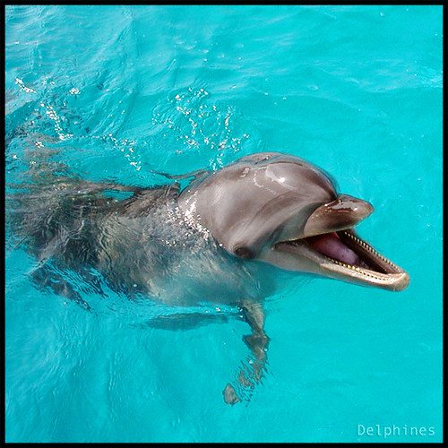 Dolphin's Smile by DELPHINES.