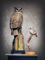 Brian_Carved Owls 1 LG_111116_2D (starg82343) Tags: 2d brianwallace eastonwaterfowlfestival