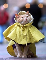 Kitty Coat (DARREN ST0NE) Tags: street light favorite canada cute fashion animal yellow digital cat canon eos interesting bravo funny bc angle britishcolumbia quality coat low photojournalism kitty victoria shutter elegant raincoat 70200 magicdonkey instantfave abigfave kissablekat darrenstone impressedbeauty kittyschoice ttelephoto lightgazer dcs520 thecatwhoturnedonandoff